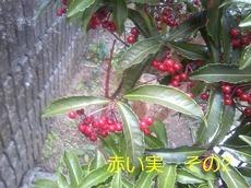 PH_480.jpg